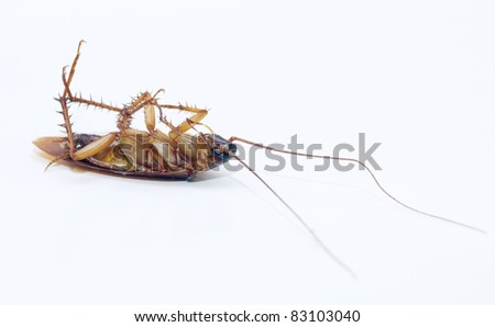 cockroach dead on isolated white background - stock photo