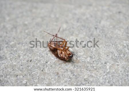 cockroach eaten by ants - stock photo