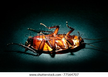 Cockroach extermination concept - stock photo
