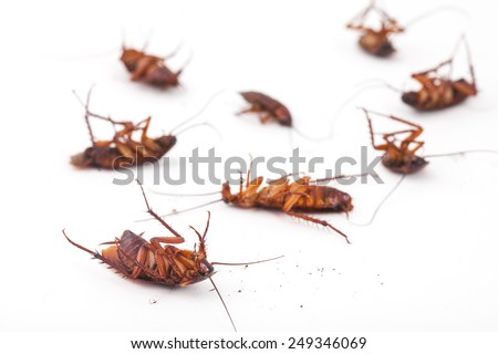 cockroach is dead on white background - stock photo