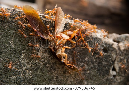 Cockroach Killed by Ant - stock photo