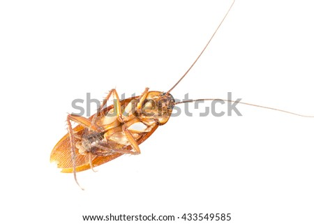 Cockroach  on a white background