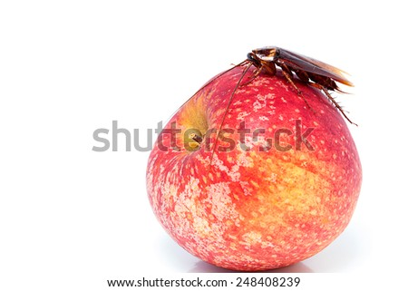 cockroach sitting and eating on a red apple (focus on cockroach). Image isolated on white, studio background. - stock photo