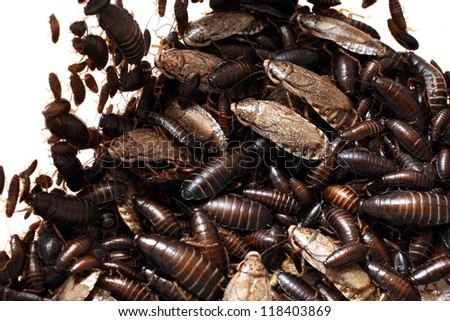 cockroaches - stock photo