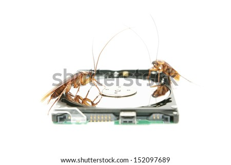 Cockroaches climbing on hard disk drive to present about computer attacked from virus infection - stock photo