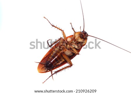 cockroaches dead  Black and white background - stock photo