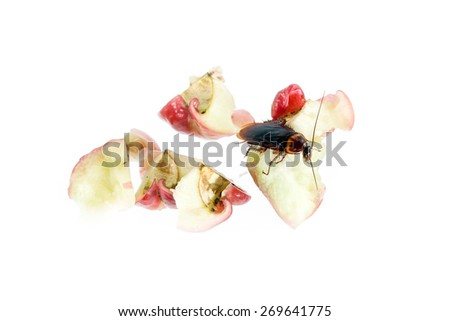 Cockroaches ,eat rose apple, Concept of cleanliness. Clean food storage - stock photo