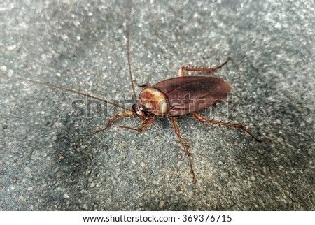 Cockroaches on the cement floor, healthcare concept  - stock photo