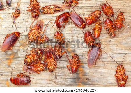 Cockroachs - stock photo