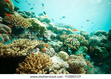 Cocktail glass on the sea bottom among corals with fishes swimming around - stock photo