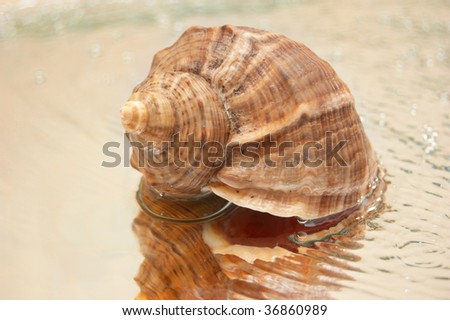 cocleshell  on water - stock photo