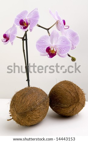Coco nuts and orchids on plain background - stock photo