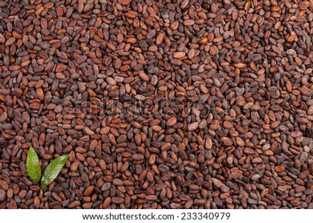 cocoa beans background with leaves