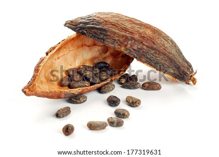 Cocoa beans into cocoa fruit and spilled beans - stock photo