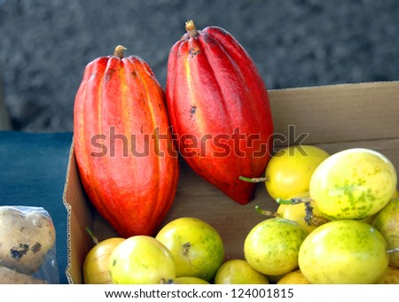 Cocoa fruit sits in cardboard box at Hilo Farmer's Market on the Big Island of Hawaii.  Picked fresh cocoa is oblong and reddish in color. - stock photo