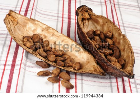 Cocoa fruit with unpeeled  beans