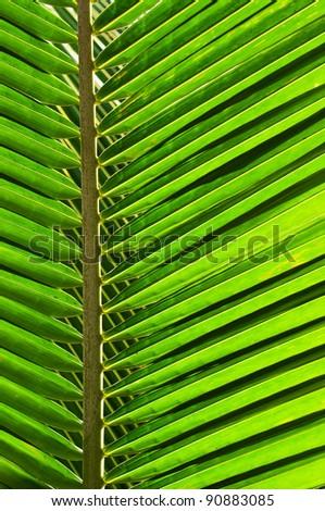 Coconunt Leaf - stock photo