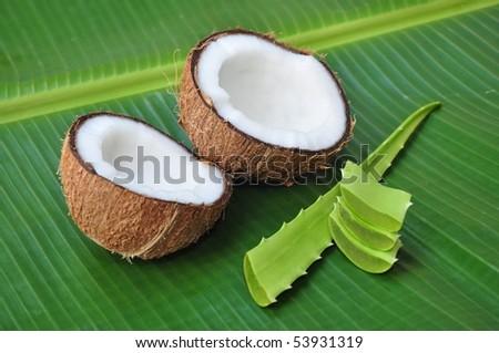 Coconut and aloe vera, alternative treatment for hair - stock photo