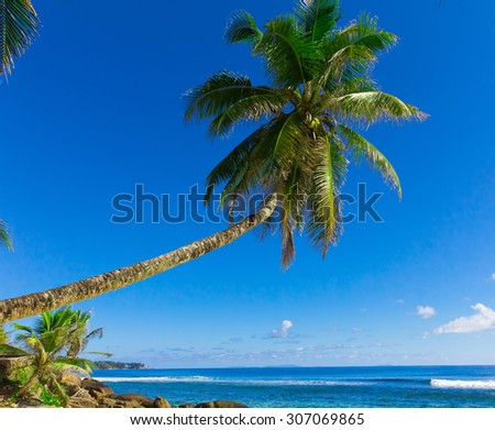 Coconut Beach Coast