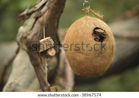 Coconut bird house in tree - stock photo