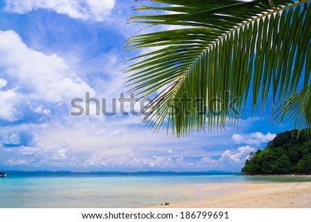 Coconut Getaway Palms Overhanging  - stock photo