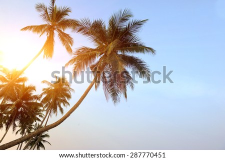 Coconut green palm tree on blue sky background - stock photo
