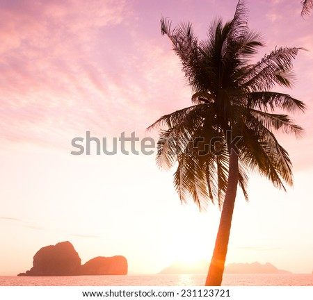 Coconut Horizon Fiery Backdrop
