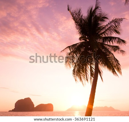 Coconut Horizon Tree Silhouettes