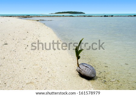 Coconut is sprouting up on One foot Island in Aitutaki Lagoon Cook Islands. - stock photo