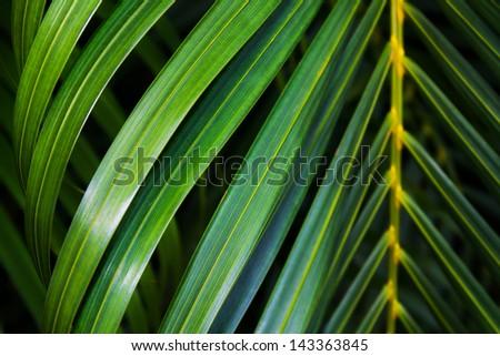 Coconut leaf background - stock photo
