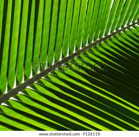 Coconut Leaf Background
