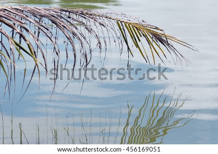 coconut leaf reflect on water - stock photo