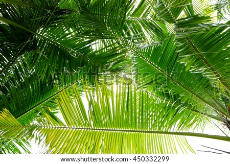 coconut leaves background
