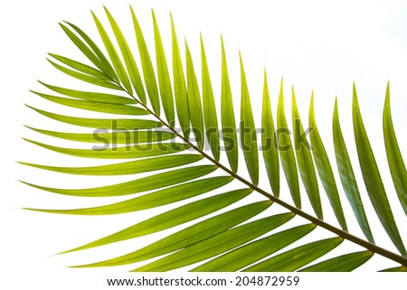 Coconut leaves can be made very many - stock photo