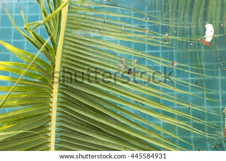 Coconut leaves fall into swimming pool, dirty swimming pool water in tropical asia - stock photo