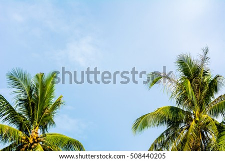 coconut leaves on blue sky background
