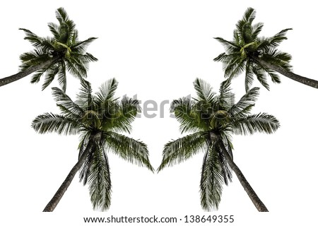 Coconut/Low angle shot of coconut on white. - stock photo
