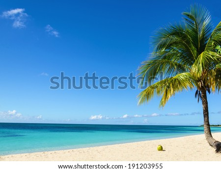 Coconut on an exotic beach with  palm tree entering the sea on the background of a sandy beach, azure water, and blue sky - stock photo