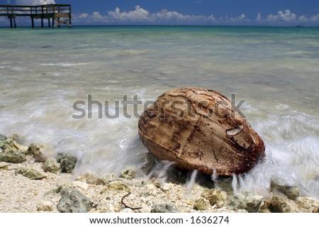 Coconut on Beach - stock photo