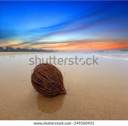 coconut on sandy ocean beach  - stock photo
