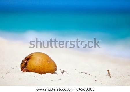 Coconut on the beach. Puka beach, Philippines. - stock photo
