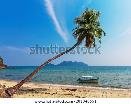 Coconut palm and boat on a tropical sandy beach - stock photo