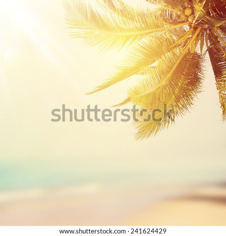 Coconut palm and tropical beach at sunset - stock photo