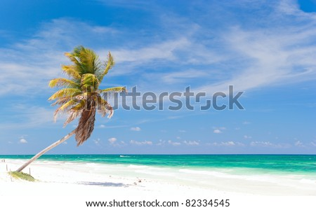 Coconut palm at perfect Caribbean beach in Tulum Mexico - stock photo
