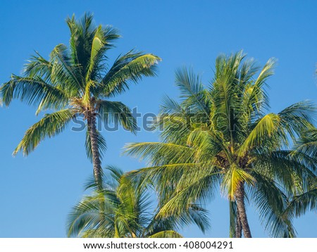 Coconut Palm (Cocos nucifera) is a large palm with pinnate leaves. - stock photo