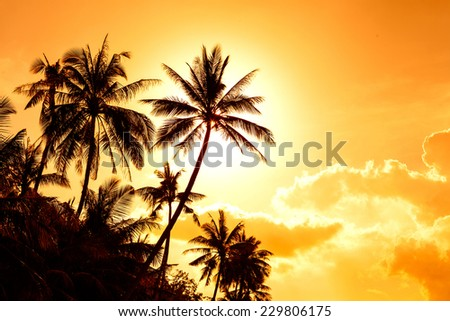 coconut palm in sunsat  - stock photo