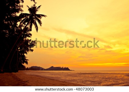 Coconut palm on sand beach in tropic on sunset. Thailand, Koh Chang, Klong Prao beach - stock photo