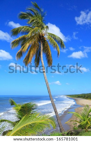 coconut palm on the background of the large beach  - stock photo