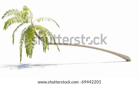 coconut palm tree - stock photo