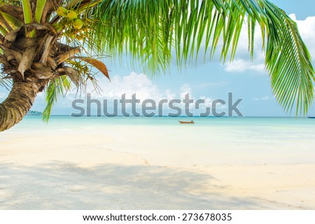 Coconut palm tree at the beautiful beach